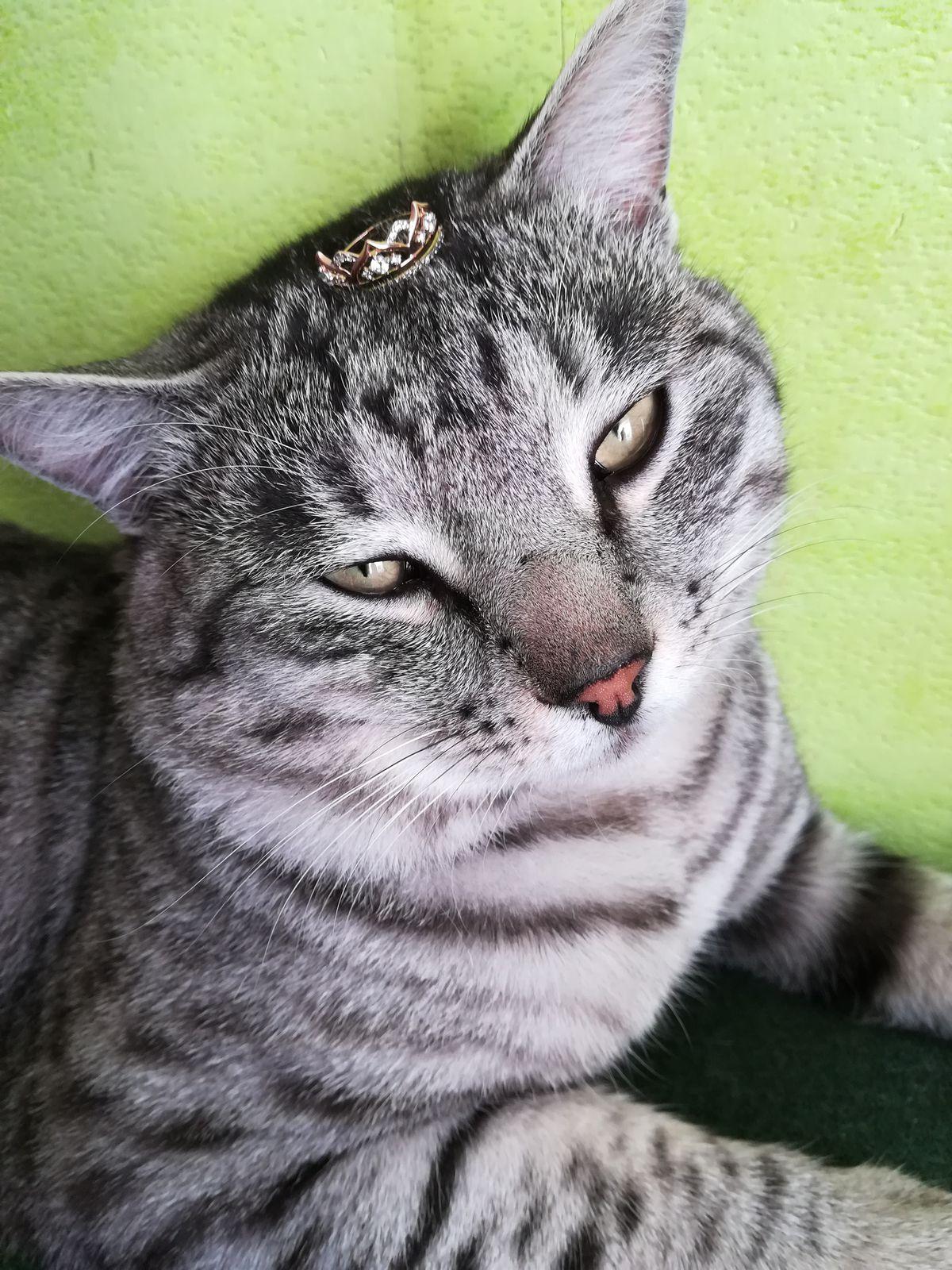 21.11.17г Колечко корона, мечта...